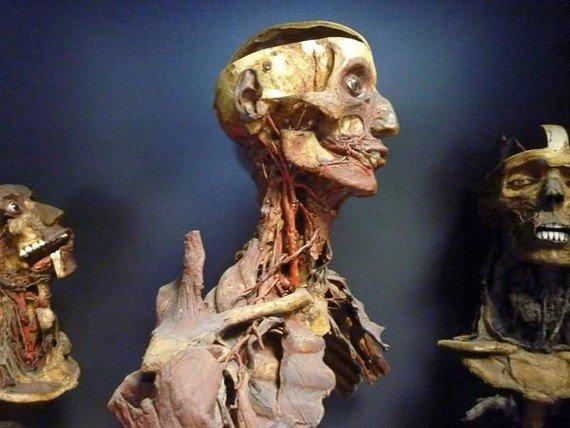 The Secret Inside the Skull of the 19th Century Mummy -3