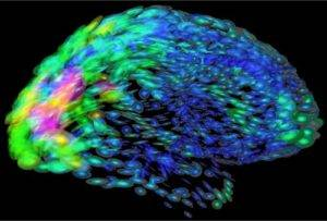 How Social Network of the Neurons in Brain Formed