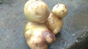 Potatoes Trying to Evolve into Human Being