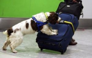 Scientists Created Robot that can Sniff Out Cocaine Like Dogs