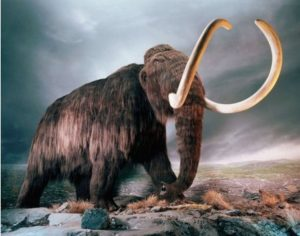 Russia and South Korea Sign Agreement to Clone the Mammoth