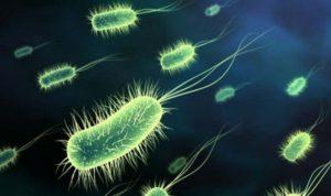 Prehistoric bacteria against antibiotics 1-0