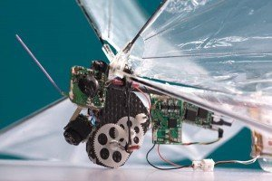 remote controlled insects