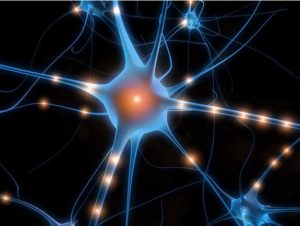 Research Identifies Neurons Used in Time Measurement 1