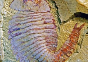 520 Million-Year-Old Brain is Surprisingly Modern, say Experts 1