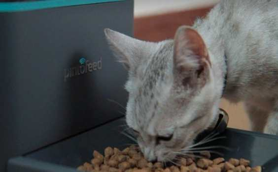 Bello and Kitty Feed from a Distance with the Web-Enabled Smartphone  5