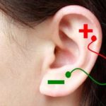 "Ears are Hidden ""Batteries"" for Electronic Devices 2"